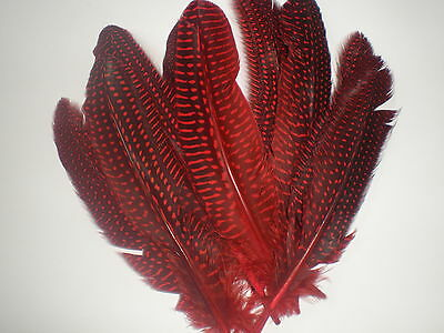 lot de 10 plumes pintade 18 cm rouge