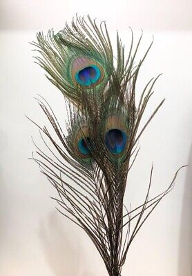 Sets of Artificial Peacock Tail Feathers DIY Millinery Craft Stylish Home Decor