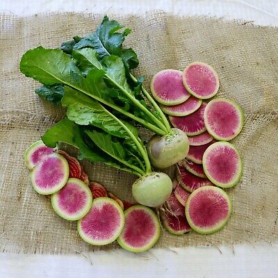 Radish WATERMELON 50 Seeds HEIRLOOM vegetable garden ALL SEASON winter hardy VEG