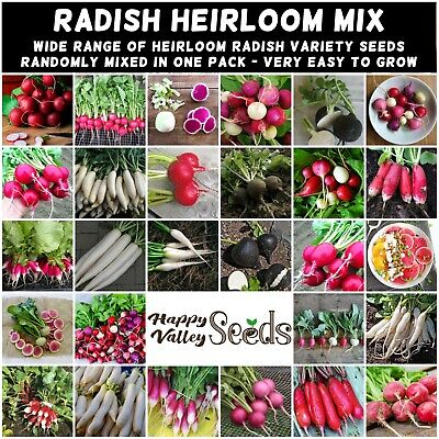 RADISH Heirloom Mix 50 Seeds vegetable garden AUTUMN WINTER SPRING non-gmo MIXED