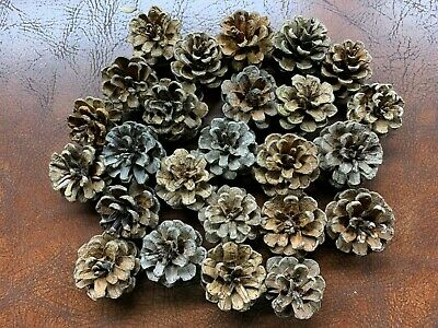 Pine Cones, Red Pine, 25 count, smaller size, cones are about 1 1/2 in x 1 inch