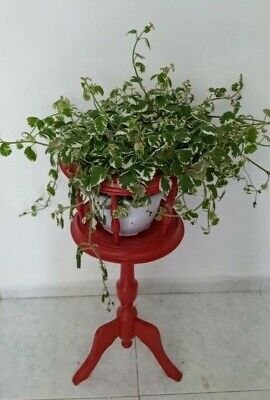 Old style vintage flowerpot  Made in Spain