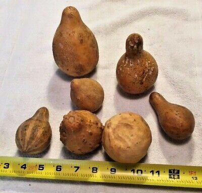 Assorted Gourds ---Lot of 7