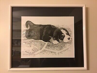 Bernese Mountain Dog Puppy - Framed Black and White Print - Very Cute!