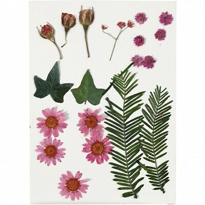 Creotime Dried Red Flowers and Sheets 19 Piece Multicolour