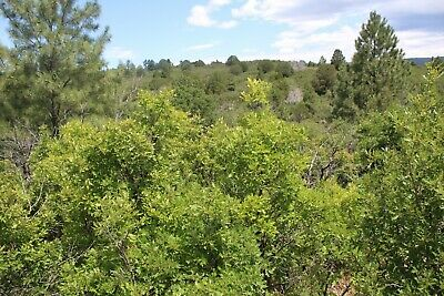 Stunning Lot in Lush Timberon, New Mexico!!! $125/month or just $3999 Cash!!!