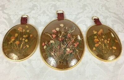 3 Vintage Retro Oval Wall Hangings with Encased Dry Flowers Concave Plastic
