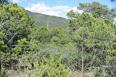 Beautiful Views & Wildlife in Timberon, NM on .4 Acres-$2999 cash or $99/mo!
