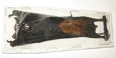 Real  Bat Scotophilus kuhlii  (hanging) from Indonesia ( Horror Taxidermy)