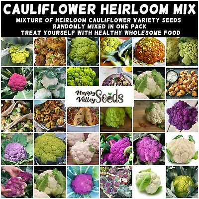 CAULIFLOWER Heirloom Mix 70+ Seeds vegetable garden ALL TYPES MIXED winter hardy