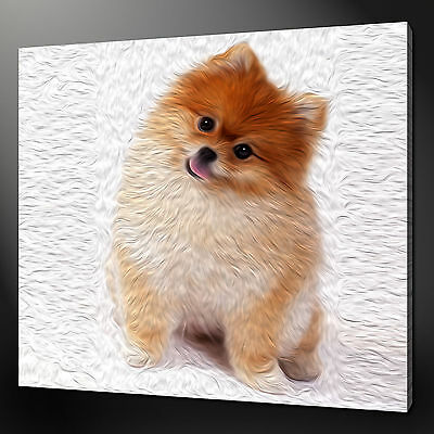 POMERANIAN WALL ART CANVAS PRINT PICTURE VARIETY OF SIZES FREE FAST DELIVERY