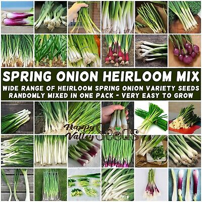 SPRING ONION Heirloom Mix 100+ Seeds vegetable garden ALL TYPES MIXED bunching