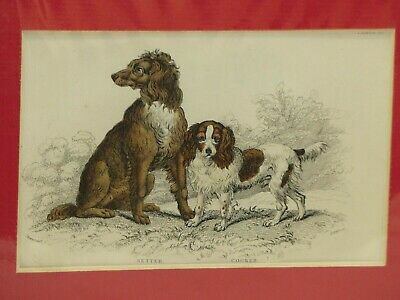 2 Setter Dog Breed Antique Print Stewart 1850's Aquatint Hand Colored 19th c