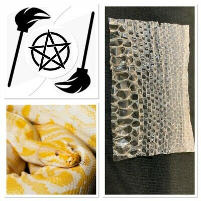 Piece of Albino Burmese Shed Python Snake Skin-VooDoo-Wiccan-Pagan-Protect spell