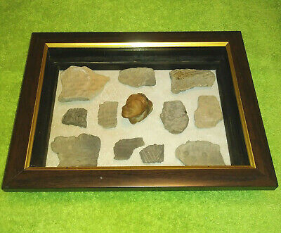 Teotihuacan Idol Head And Pottery Artifacts Display W/ 1947 Provenance!
