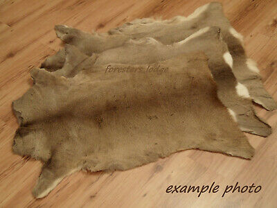 Roe Deer Skin fur rug hide taxidermy fly tying cabin throw Reh Chevreuil B-grade