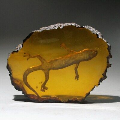 Collectable China Amber Internal Mosaic Gecko Hand-Carved Noble Unique Statue