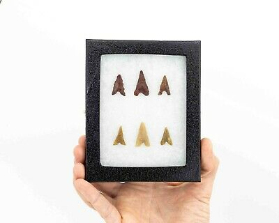 Collection Arrowheads From The Early Neolithic period. Tabelbala (Algeria)