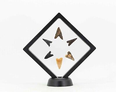 Collection Arrowheads From The Early Neolithic Period, Tabelbala (Algeria)