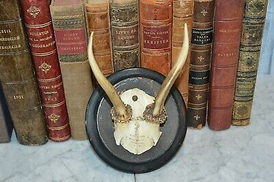 Antique German Deer Antlers Dated 1891 Turned Wood Black Plaque Shield Mount