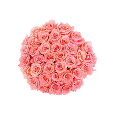 24 Fresh Roses delivered to your door - Amsterdam Fresh Cut Flowers