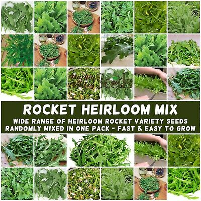 ROCKET HEIRLOOM MIX 1000+ Seeds vegetable garden ALL TYPE MIXED salad pizza EASY
