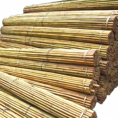 8ft Bamboo Canes Thick Professional Bamboo Plant Support Garden Canes Pack Of 10