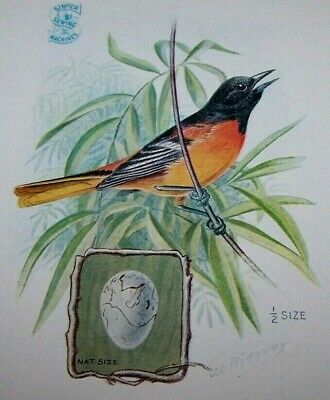 1929 Singer Sewing Machine Bird Trade Card-Baltimore Oriole-Children's Clothes