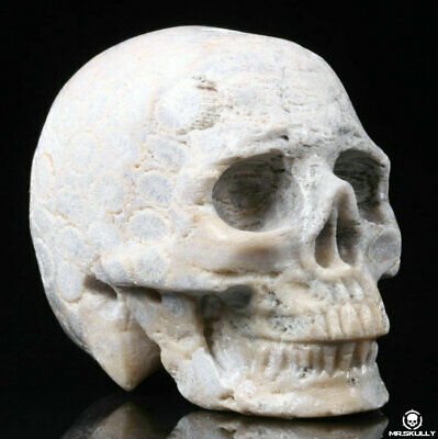 """2.0"""" Coral Fossil Jasper Carved Crystal Skull, Realistic, Crystal Healing"""