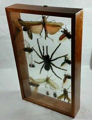 Real Framed 13 Exotic Insect Collection Taxidermy Entomology Shadow Box Glass