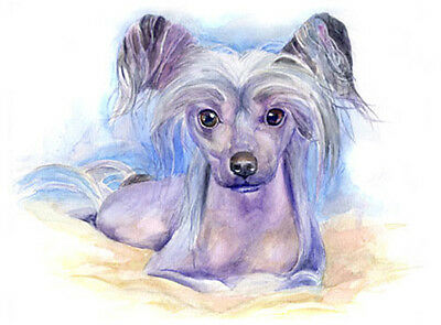 artav Chinese Crested 01 Art Print of Watercolor Paint