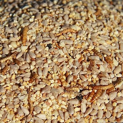2Kg Robin & Finch No Mess Garden Wild Bird Seed Feed With Dried Mealworms W/o