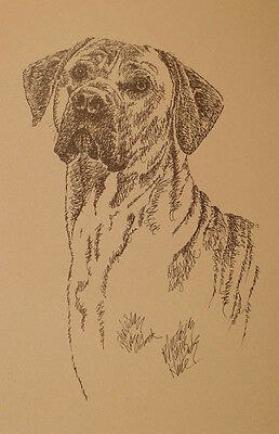 Rhodesian Ridgeback Dog Art Portrait Print #44 Kline adds your dogs name free.