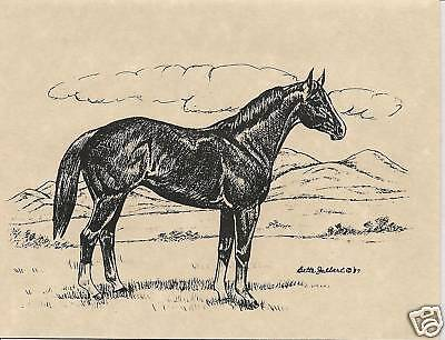 Quarter Horse Notecards, 8 per Box with Envelopes