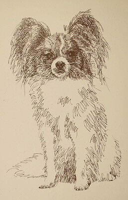 Papillon Dog Breed Art Portrait Print #93 Kline draws your dogs name free. GIFT