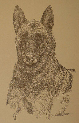 Belgian Malinois Dog Art Portrait Print 93 Kline adds dog name free WORD DRAWING