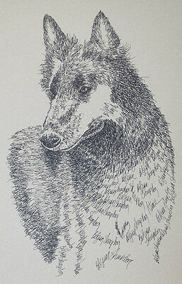 Belgian Sheepdog Art Portrait Print 40 Kline adds dog name free DRAWN FROM WORDS