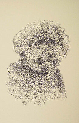 Portuguese Water Dog Art Portrait Print 61 Kline adds dog name free WORD DRAWING