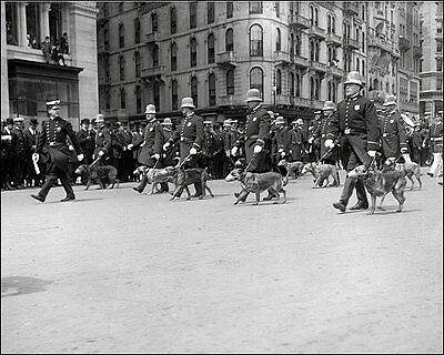 New York Police Parade #3 Photo 8X10 - 1908 Police Dogs