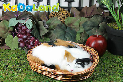 Adorable Sleeping Calico Cat in basket w/ cusion plush Furry Animal Taxidermy