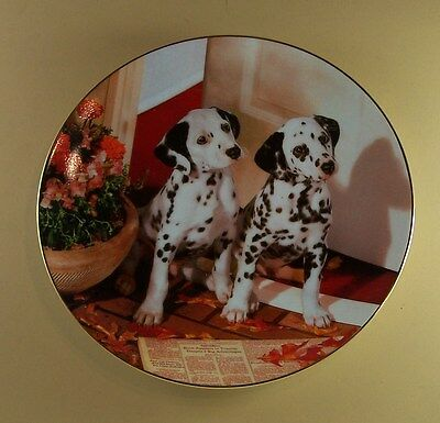 SPOTTED IN THE HEADLINES Those Delightful Dalmatians Plate Dog Puppy