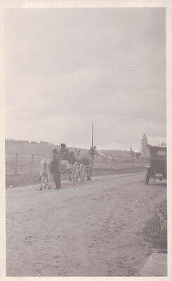 1908-1910 Horse Team & Buggy pulling Jersey Cow Dirt Road RPPC Photo Postcard