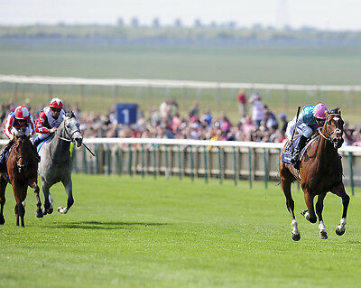Frankel Ridden By Tom Queally 14 (Horse Racing) Photo Print