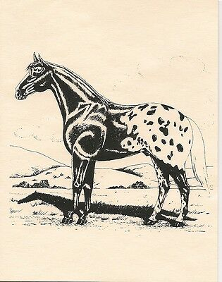 Appaloosa Horse Notecards