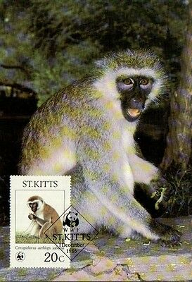 (72357) Maxicard - St Kitts - Green Monkey - 1986