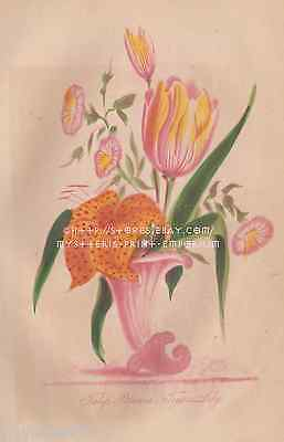 Tulip Petunia-Tiger Lily-Flowers-Hand Colored-1866 OLD ANTIQUE VINTAGE ART PRINT