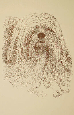 Lhasa Apso Dog Art Portrait Print #34 WORD DRAWING Kline adds dogs name free.