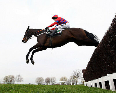 Sprinter Sacre 19 Ridden By Barry Geraghty (Horse Racing) Photo Print