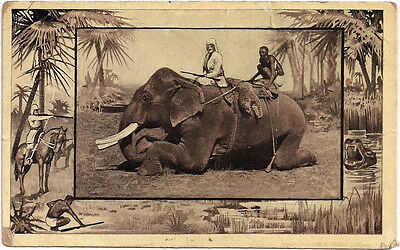 The African Elephant- Vintage Postcard