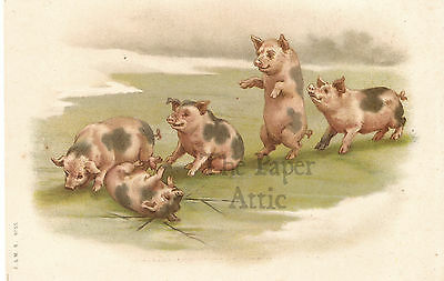 Cute Pigs on Thin Ice Antique Vintage French EARLY Chromo Postcard